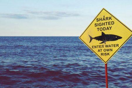 Shark sighted: I think I'll go for a swim!
